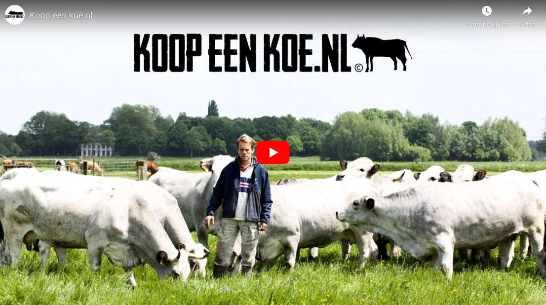 Koopeenkoe video Biologisch Limousin vlees